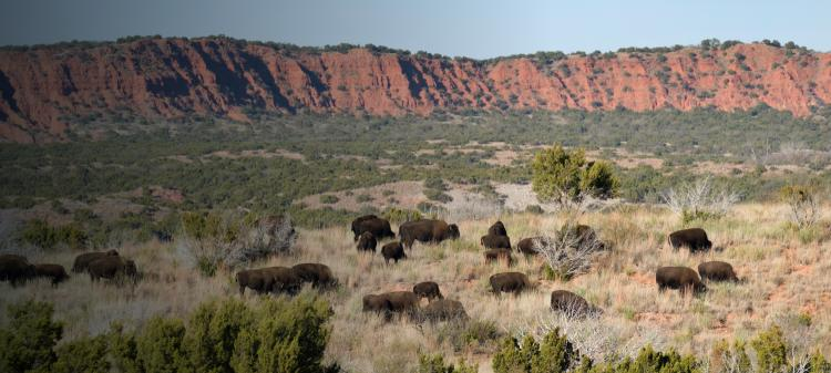 Texas Panhandle grassland