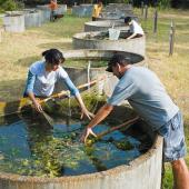 Students studying algae in water tank.