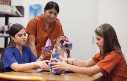 Nursing group studying model of internal organs.